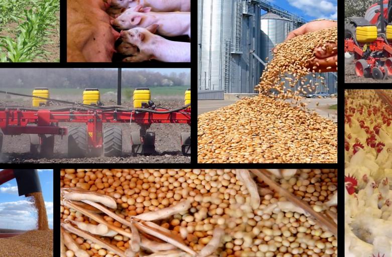 شرکت تولید کننده خوراک دام طیور آبزیان