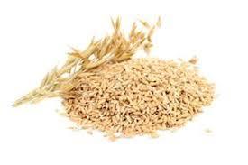 خرید خرده گندم اصلاح شده در همدان