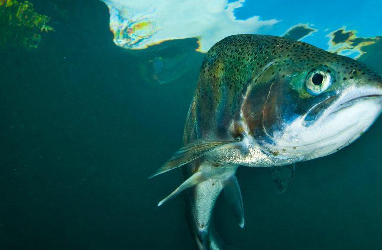 قیمت خرید پودر ماهی ضایعاتی کارخانه