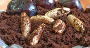 صادرات پودر خرما تغذیه دام طیور