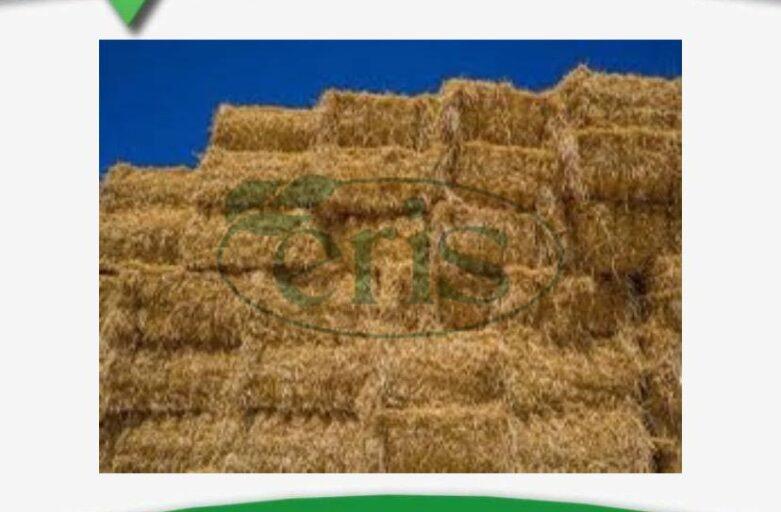 تغذیه کاه گندم چه نقشی در خوراک دام